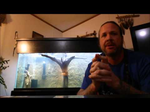 Cycle an aquarium in 2 weeks with Seachem Stability