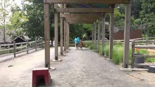 Turtle Back Zoo - Pony ride -