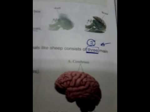 شرح science للصف السادس الابتدائى لغات - الترم الأول ( 12 ) - the nervous system