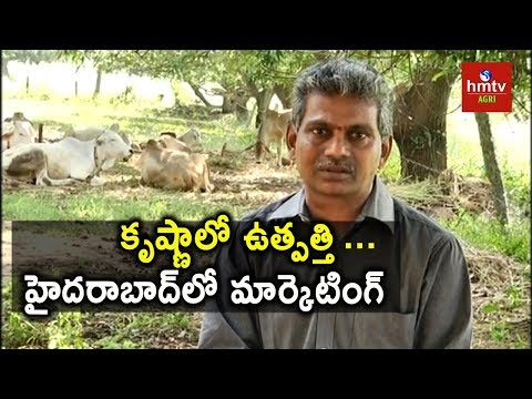 Natural Farming | Farmer Sesha  Sai Vara Prasad Success Story | hmtv Agri