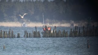 Feds Kill Thousands of Cormorants to Save Salmon