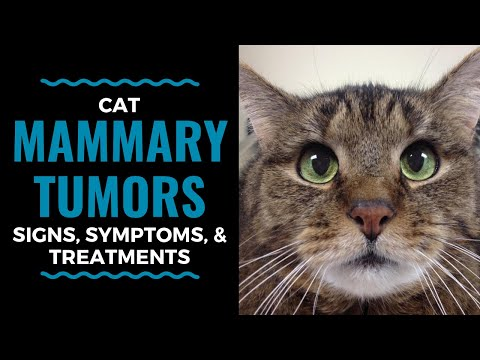Cat Mammary Tumors: Signs, Symptoms, and Treatments: Vlog 92