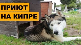 Приют на Кипре. Российские волонтёры спасают собак-смертников