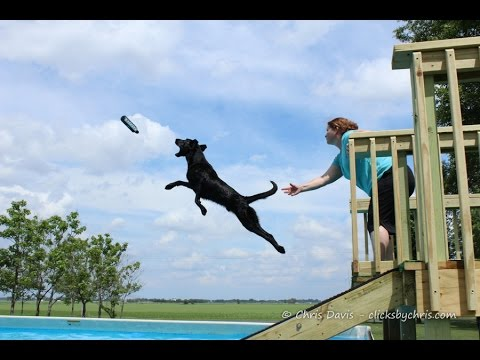 The Sport of Diving Dogs - Dock Jumping