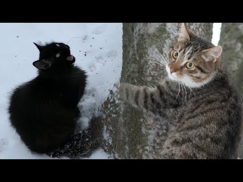 Cat hides on the tree from Black cat