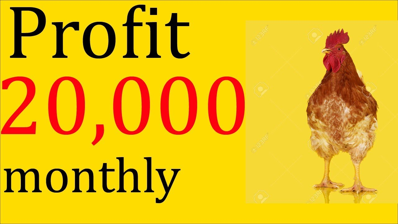 Golden Misri Business with low investment/Desi murgi ka
