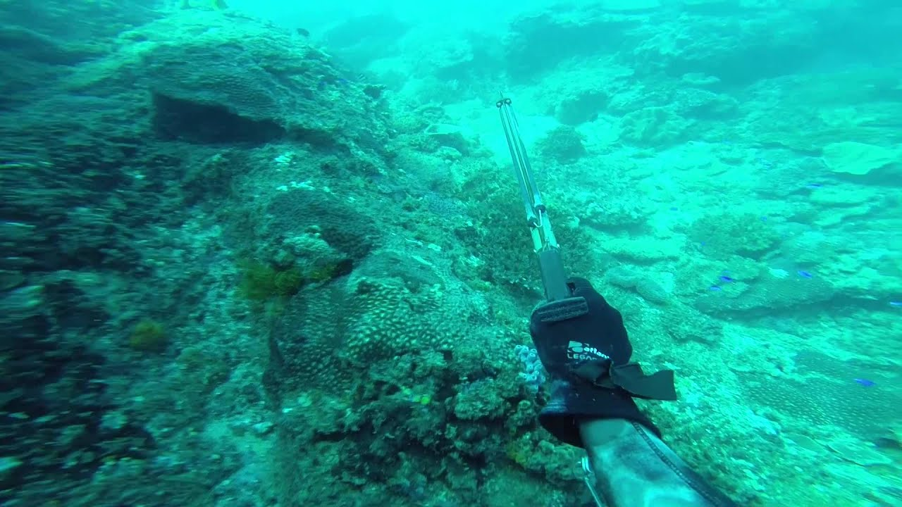 Spearfishing sunshine coast inshore reefs