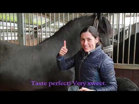Taste horse milk! 😋 Friesian Horse