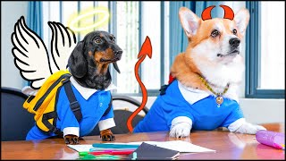Back To School! Cute & funny dachshund and corgi dog video!
