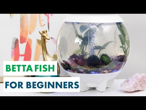 Design A Plant-Filled Oasis For A Betta Fish - Aquarium Plants - HGTV Handmade