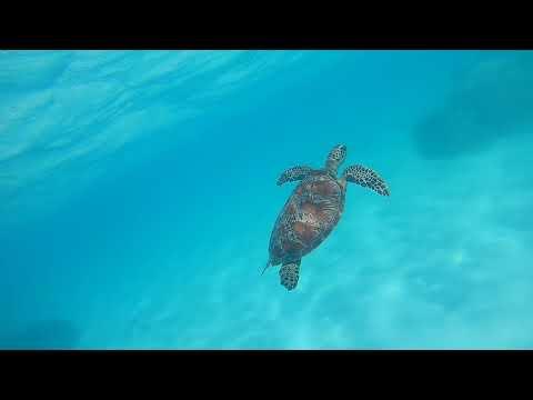 Australia - Cape Tribulation - Ocean Safari excursion - Snorkel 2 (turtle) - Sept 2017