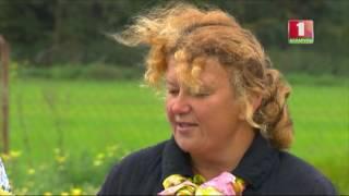 Как уберечь хризантемы зимой? Дача.