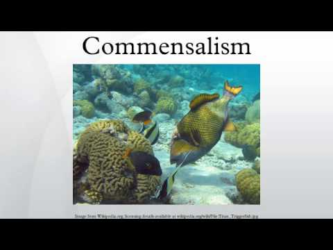 Commensalism - YouTube