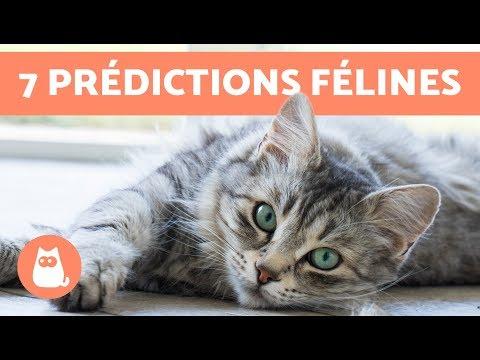 7 Choses Que Les Chats Peuvent Prédire