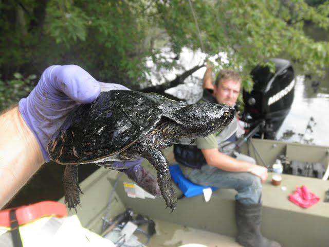 Turtles vs. Oil - Great Lakes Now - 1017 - Segment 2