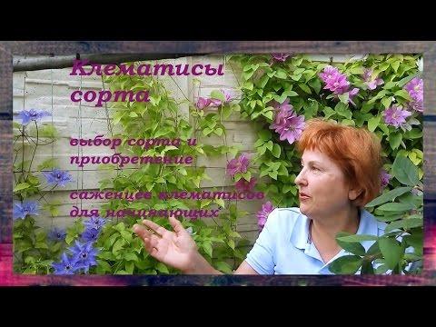 КЛЕМАТИСЫ СОРТА сорта клематисов для начинающих Советы от Клематис TV
