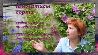 кЛЕМАТИСЫ СОРТА - сорта клематисов для начинающих Советы от Клематис TV