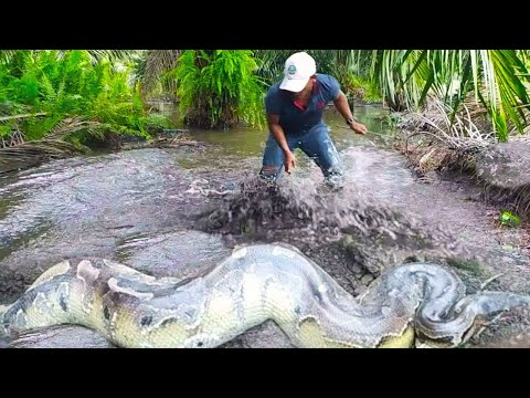 15 Strangest Things Recently Discovered In Asia #2