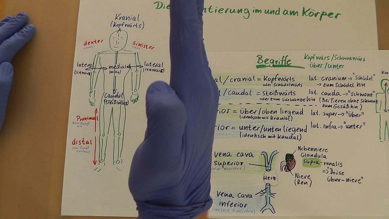 Richtungs- und Lagebezeichnungen am menschlichen Körper (Anatomie ...