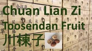 103 Chinese Herbal Medicine, TCM, Herb - Chuan Lian Zi (Toosendan Fruit) 川楝子 - 中医 中药 草药