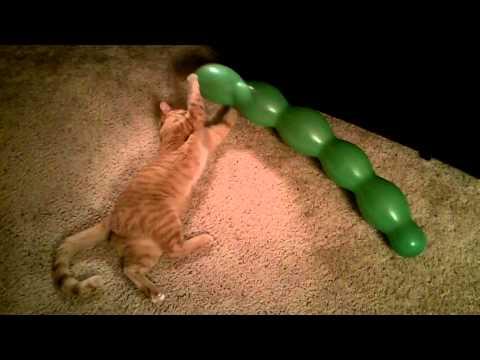 Cat pops balloon