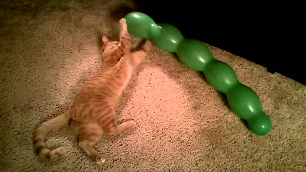 Cat Pops Balloon YouTube - They gave this tiny dog some water balloons what happens next is hilarious