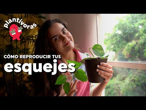 PLANTÍVORAS | ¿Por qué no logro reproducir mis plantas? Errores al hacer esquejes