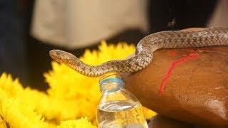 VTC14 | Hàng nghìn người đến cúng bái hai con rắn trên mộ vô danh