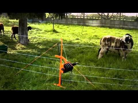 Recinzione elettrica con equifence doovi for Vortek recinzioni
