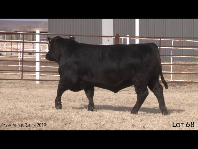 Payne Angus Ranch Lot 68