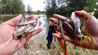 Video LIVE BAIT vs. ARTIFICIAL LURE Fishing Challenge -- Which Catches BIGGER Fish??? download MP3, 3GP, MP4, WEBM, AVI, FLV November 2018