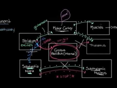 Khan Academy - The Basal Ganglia: The Direct Pathway
