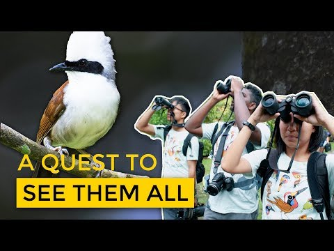 The 'Wildlife' of Birders