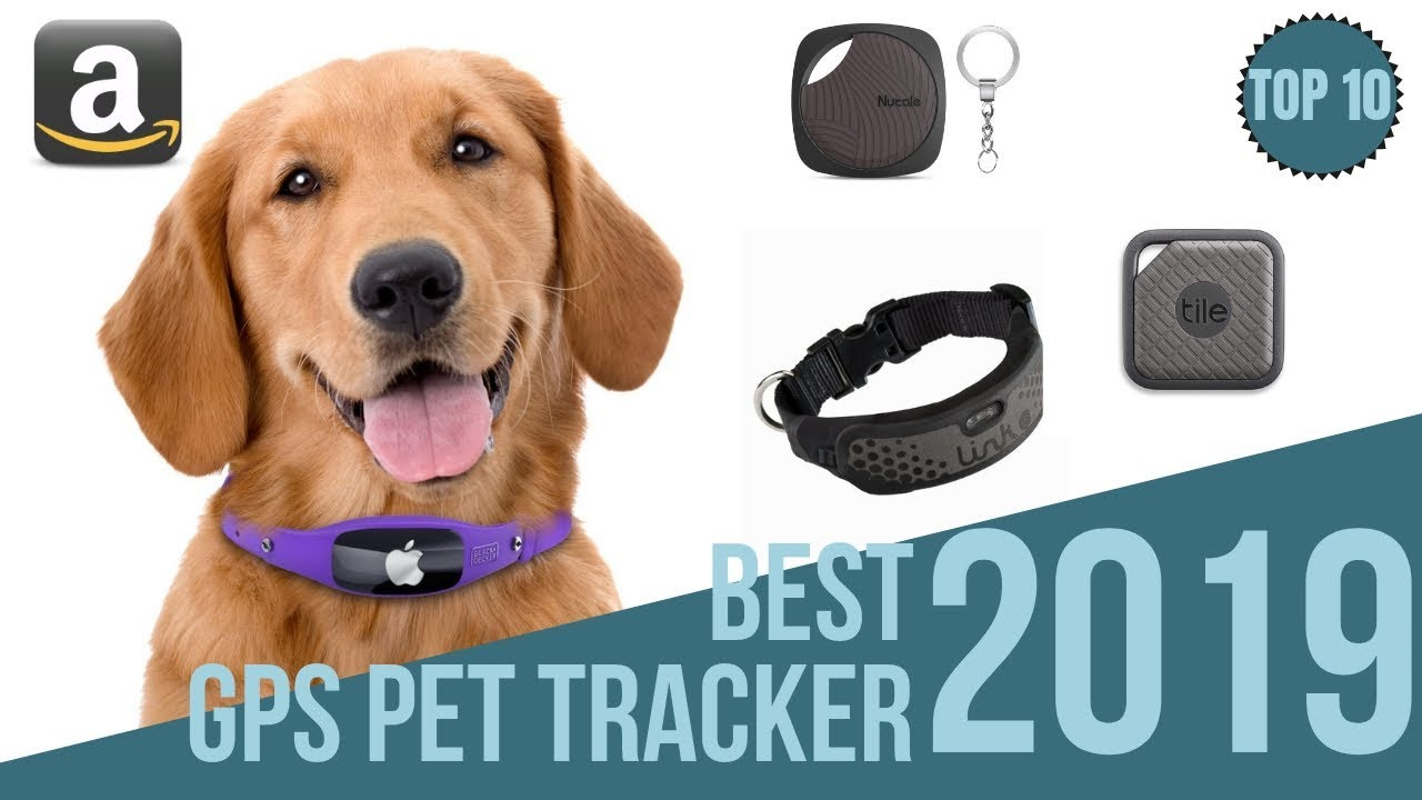 10 best gps tackers for pets 2019 find your pet top10 bluetooth gps pet collar 2019