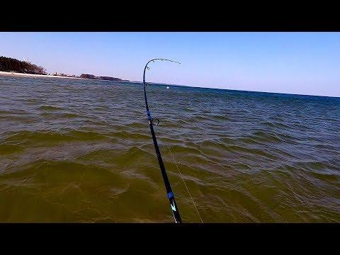 Ловля лососевых / Балтийское море / апрель 2019
