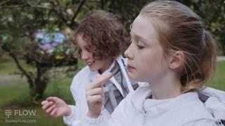 School Kids Harvest Honeycomb & Honey from their Hybrid Flow Hive