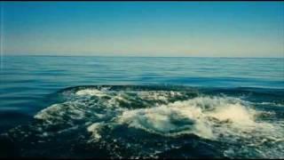 Wild Ocean Trailer - Digima