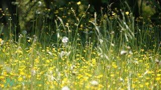 Nejlepší potravina proti senné rýmě (sezónním alergiím)
