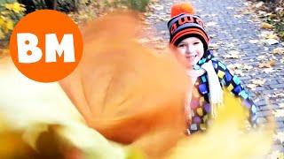 ВМ: Собираем листья и учим названия деревьев | Collect leaves and learn the names of trees