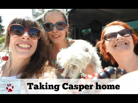 Taking a special dog home  | Vlog #5