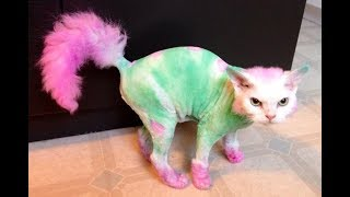 Приколы с Котами - Смешные коты и кошки 2017  || смешные подборки с котами||приколы||