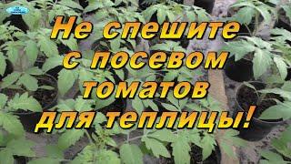 Когда сеять томаты для теплицы. Не спешите сеять их сейчас!
