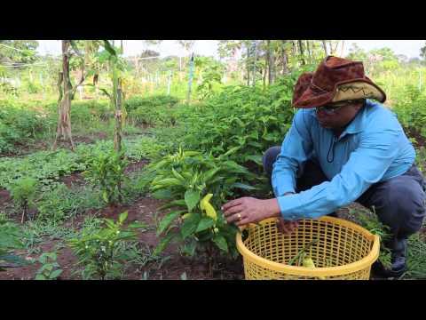 Mix Crop Organic Model Farm