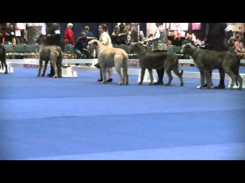 12-13-2014, Part 2 of 3 - Eukanuba National Championship - Irish Wolfhounds