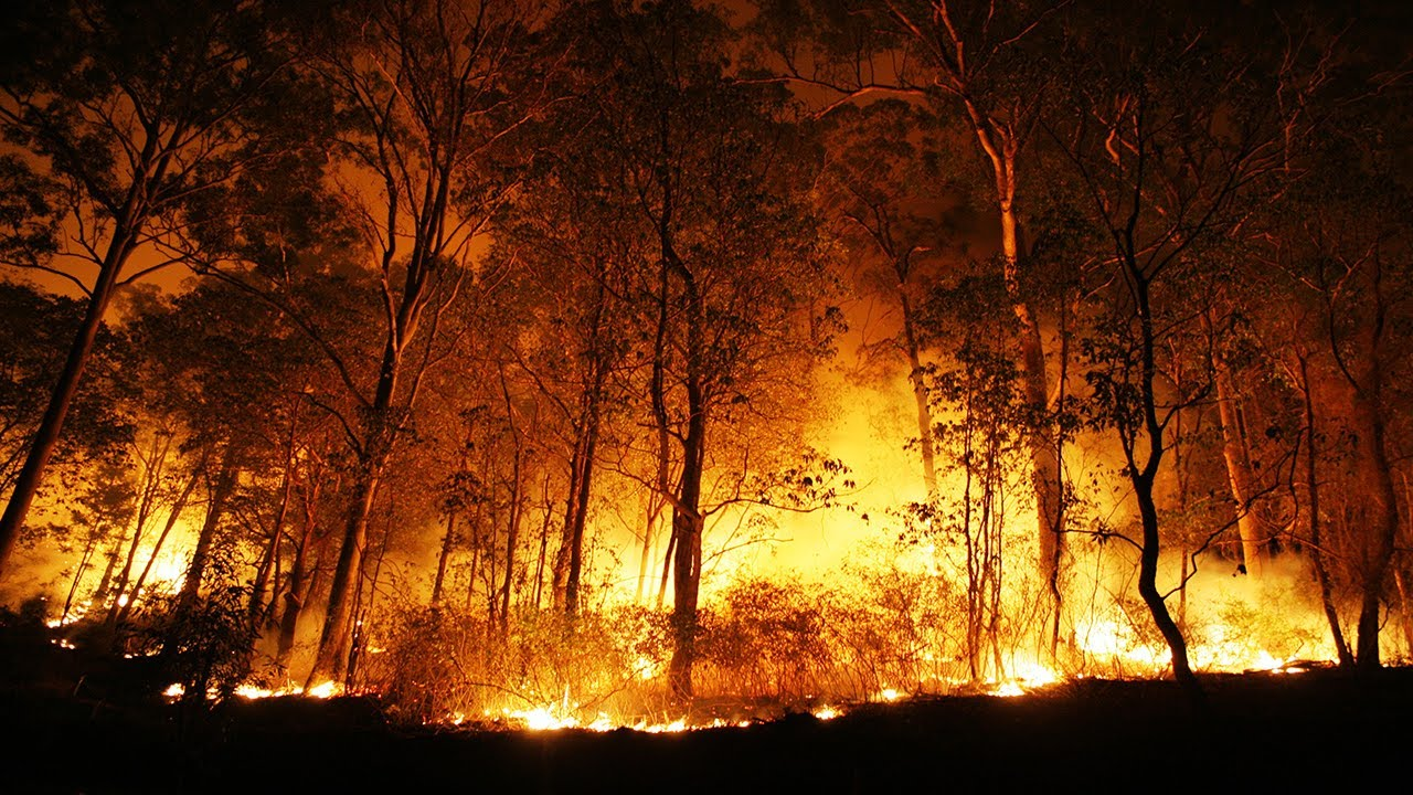 cause and effects of forest fires Deforestation - causes, effects and solutions: deforestation in simple term means the felling and clearing of forest cover or tree plantations in forest fires.