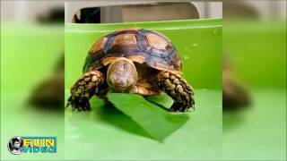TURTLE best ultimate instagram video compilation thumbnail
