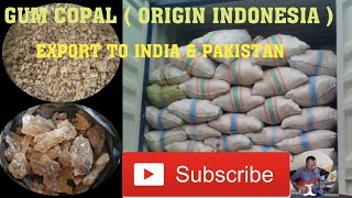 GUM COPAL (ORIGIN INDONESIA) PART#2