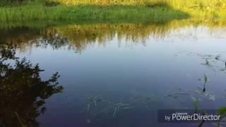 1 минута теплого денька😉 #озеро#котенок#ягоды#дети#relax