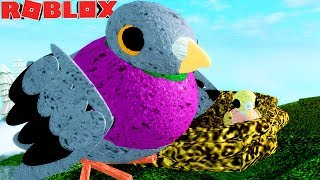 LIFE OF DOVE Cub! CRAZY PIGEON and HIS FATHER! -ROBLOX Feather Family | * For Children * 🦅