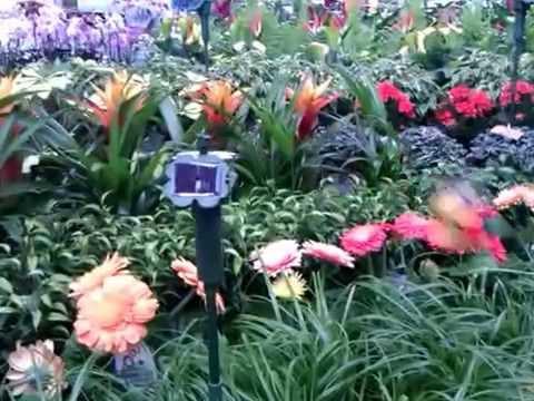 Wahnsinn für den deutschen Garten Teil 1